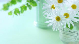 白いお花 ギフト